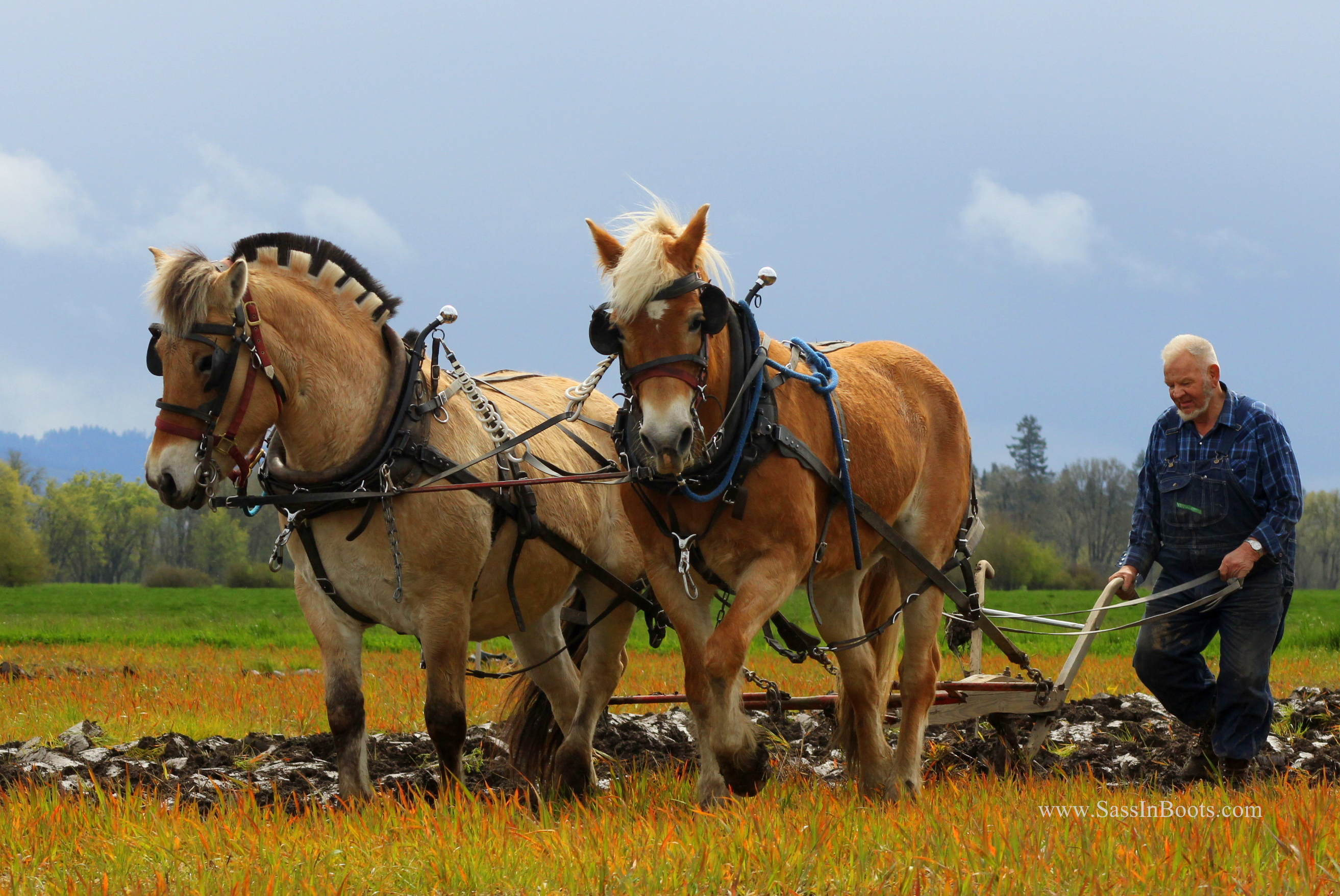 Horses & Plows Look Like Salt Of The Earth - Sass In Boots - photo#12